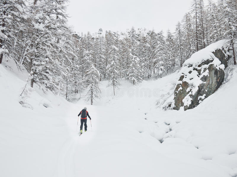 Backcountry narciarka obraz royalty free
