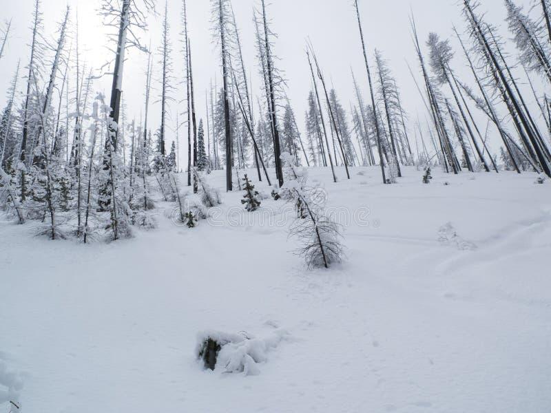 Backcountry Ski Tracks royaltyfri foto