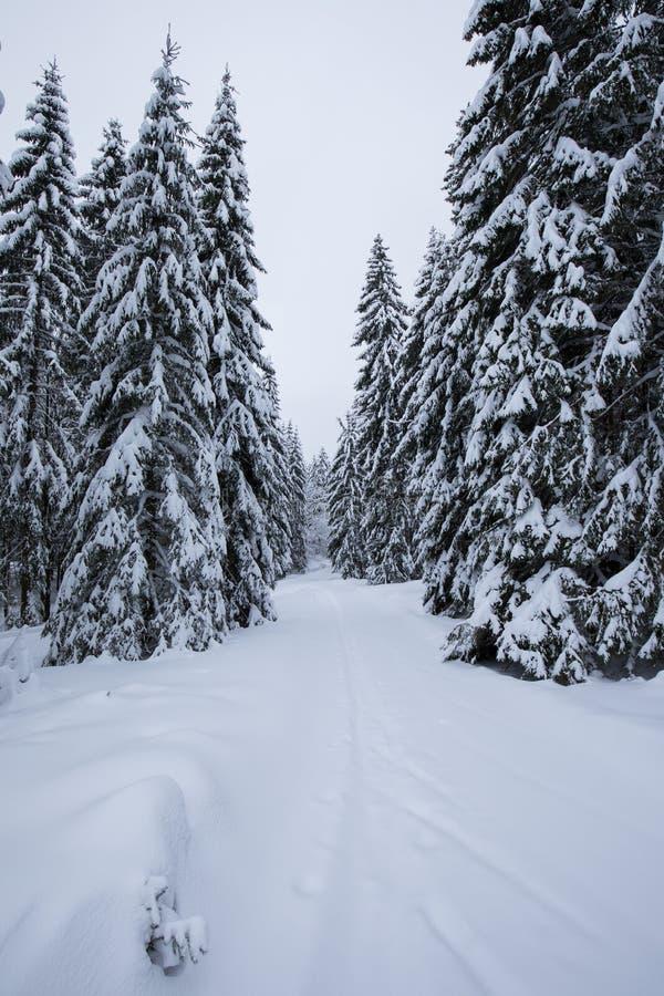 Backcountry skidåkare som skjuter till och med dimman på en snöig lutning Skida turnera i villkor för hård vinter Skidar den spor arkivbild