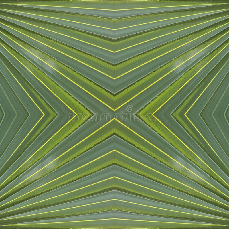 abstract design with green palm leaves, background and texture vector illustration