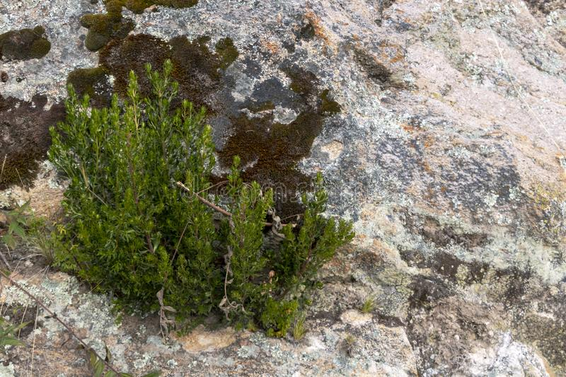 Backdrop of green plant life growth in stone. Natural background with copy space stock photos