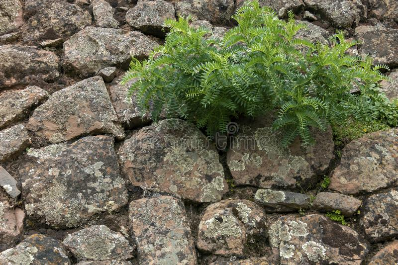 Backdrop of green plant life growth in stone. Natural background with copy space royalty free stock photography