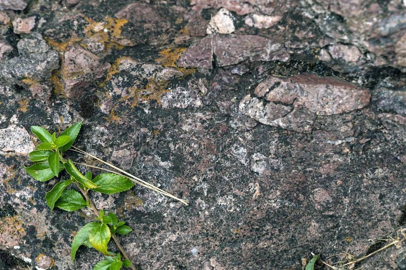 Backdrop of green plant life growth in stone. Natural background with copy space royalty free stock photo