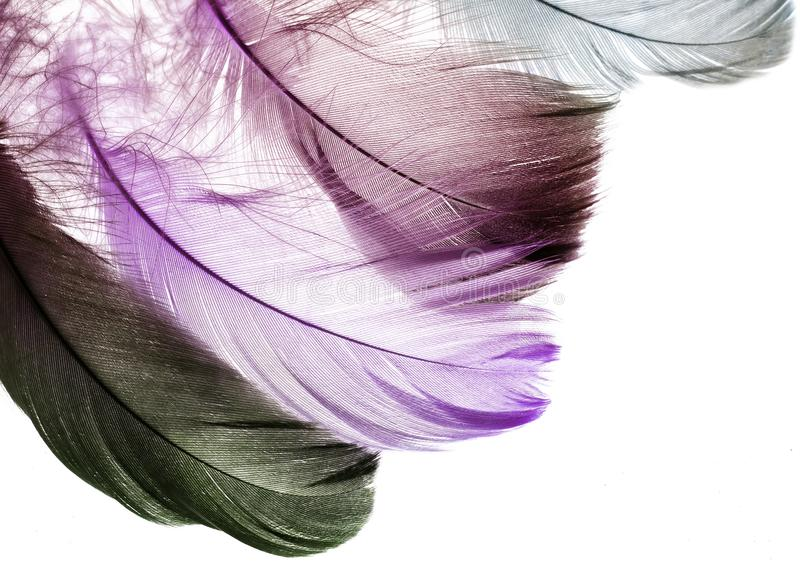 backdrop of the many beautiful natural bird feathers royalty free stock photos