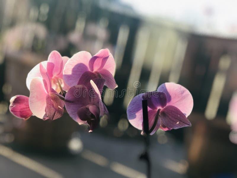 backfround σπίτι λουλουδιών που απομονώνεται πέρα από το λευκό στοκ φωτογραφία