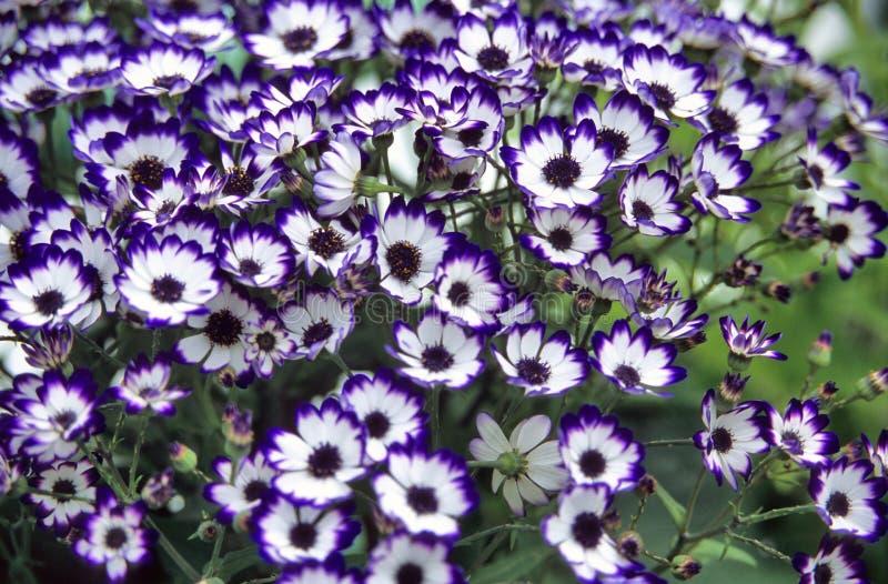 Backgorund floral bleu images libres de droits