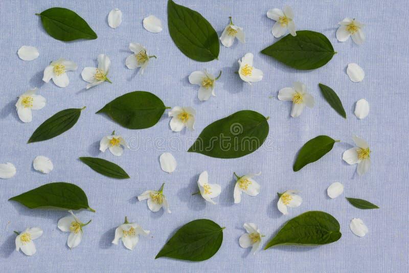 Backgorund floral romantique image stock