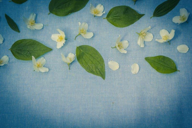 Backgorund floral romantique images libres de droits