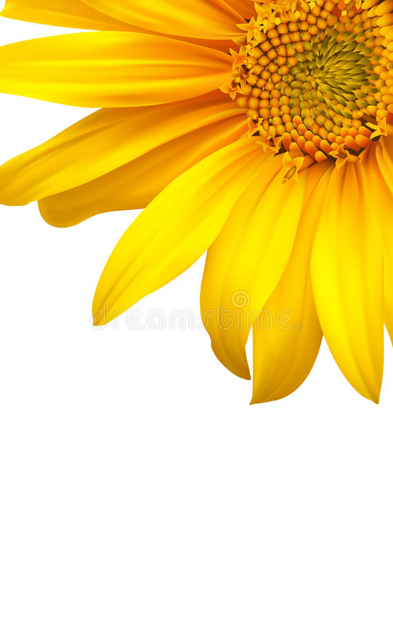 Backgound de fleur. Tournesol illustration stock