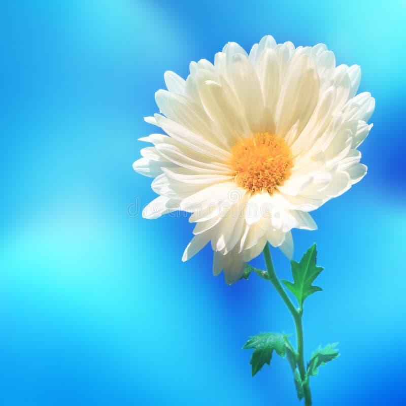 Backgound de tache floue de nature de fleur photos stock