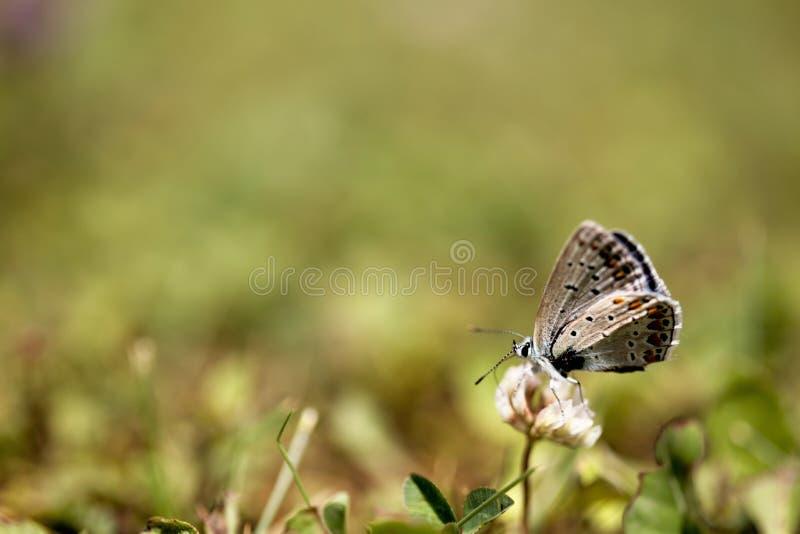 Backgr saudável natural idílico bonito do fim do verão do ambiente imagem de stock royalty free