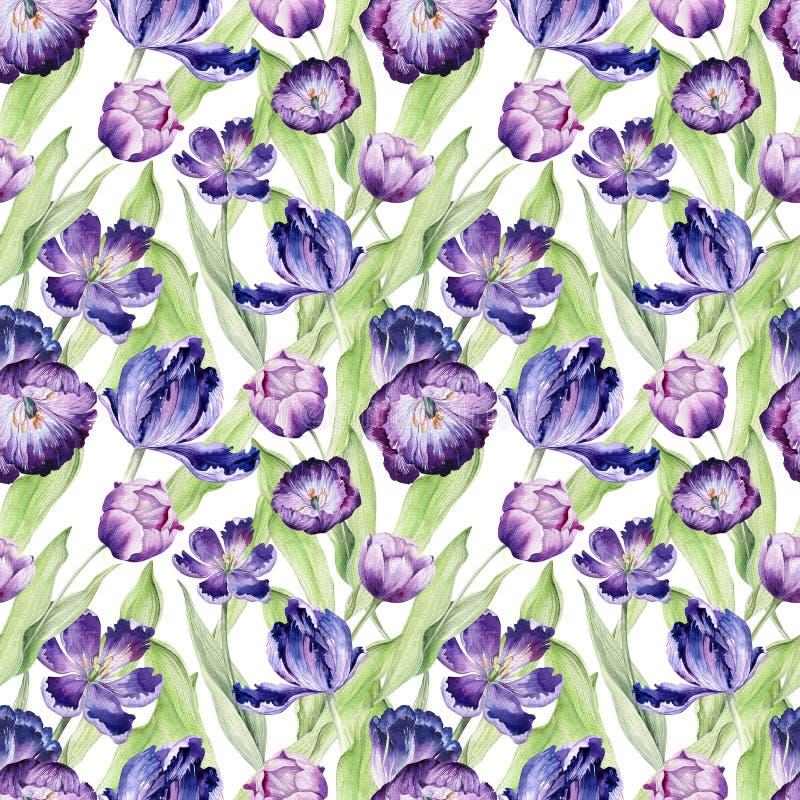 Backgraund floral da tulipa da aquarela Teste padrão colorido sem emenda da mola Planta violeta da tulipa do Watercolour Flor rox ilustração royalty free