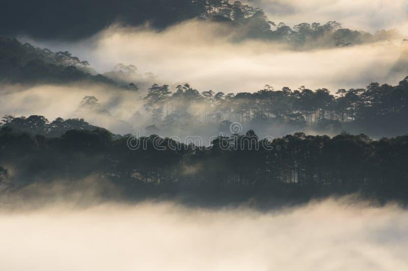 Backgroud com a floresta do pinho da tampa da névoa e a mágica da luz, raios de sol imagens de stock royalty free