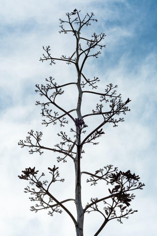 Backgroud muerto del cielo azul de la pizca del árbol imagen de archivo libre de regalías