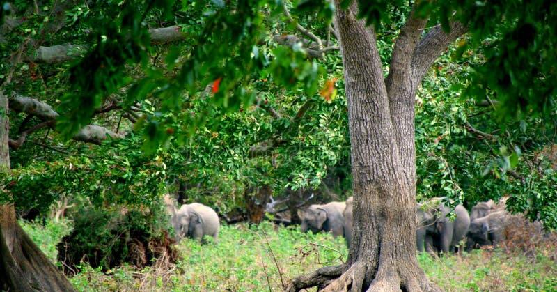 Backgroun живой природы стоковое фото rf