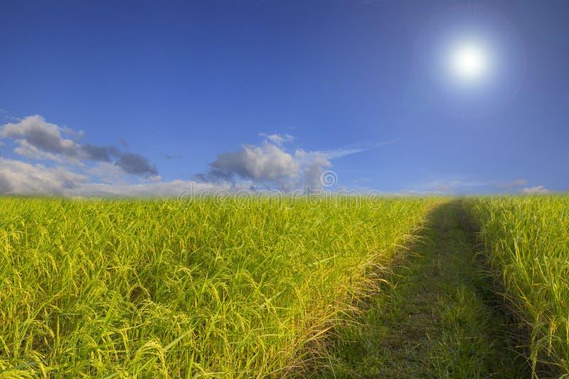 Backgroun nuageux de paysage de nuage de ciel bleu d'herbe verte de gisement de riz photos stock