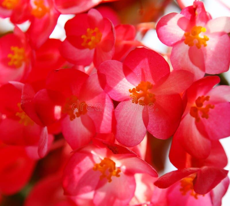 Download Background stock photo. Image of floral, arrangement - 12526766