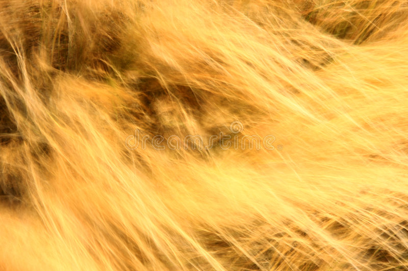 Download Background stock photo. Image of exposure, yellow, blur - 6041618