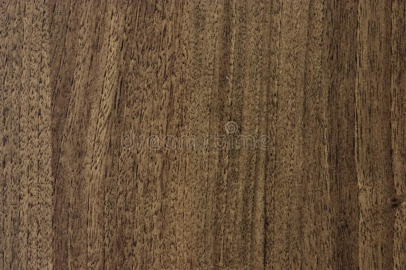Texture. Background abstract designer glare web tree structure brown royalty free stock image