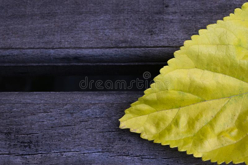 Background abstract yellow leaf wallpaper royalty free stock images