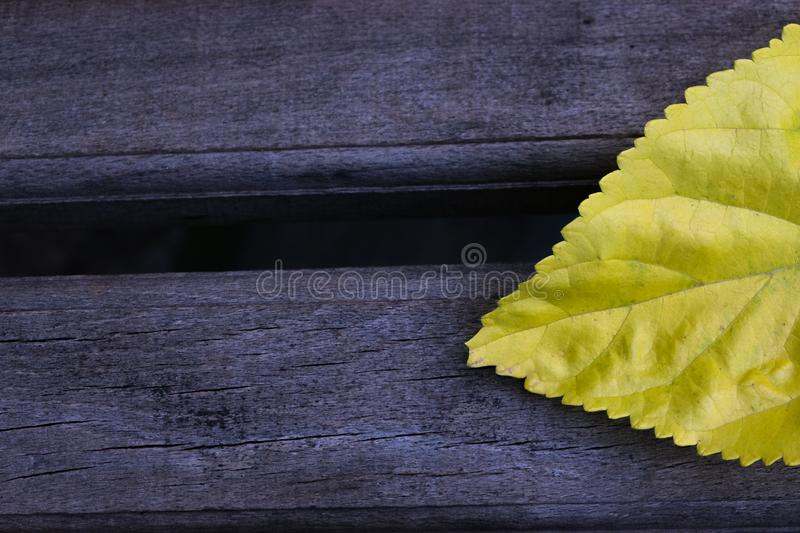 Background abstract yellow leaf wallpaper stock photo