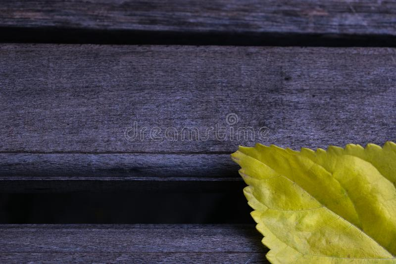 Background abstract yellow leaf wallpaper royalty free stock image