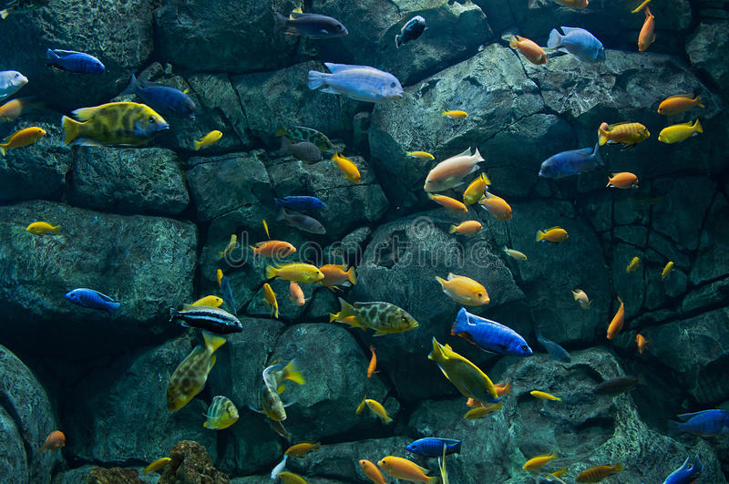 Background of African fishes stock photo
