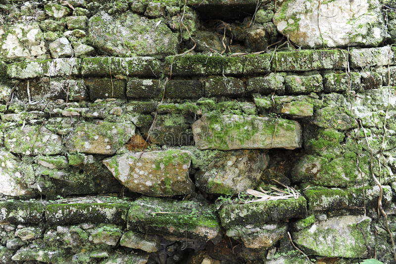 Background ancient brick wall. With moss stock photos