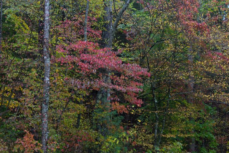Background of autumn leaf shapes and colors in a forest. Horizontal aspect stock image