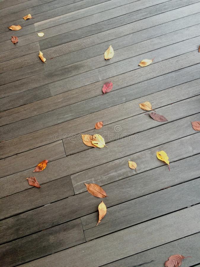 Background of autumn leaves on the dark boards floor stock images