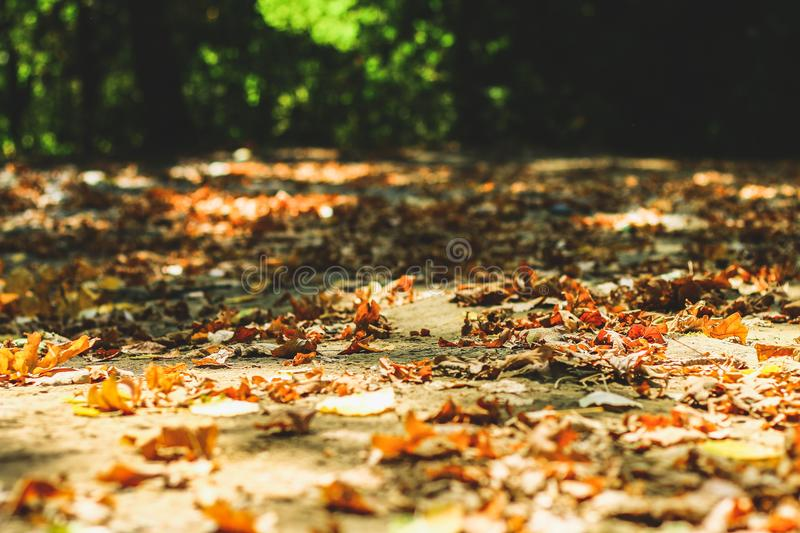 background of autumn leaves autumn leaves in a Park on earth, yellow, green leaves in autumn Park. royalty free stock images