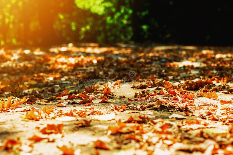 Background autumn leaves autumn leaves in a Park on earth, yellow, green leaves in autumn Park royalty free stock photos
