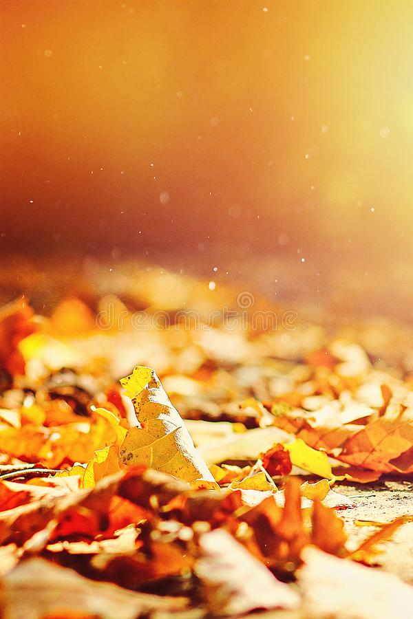 background of autumn leaves autumn leaves in Park on earth, yellow, green leaves in autumn Park royalty free stock photo