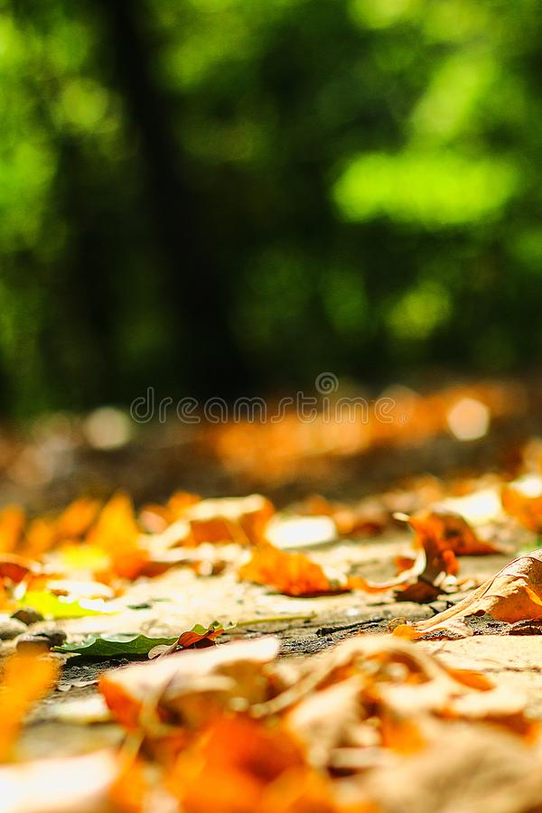 background of autumn leaves autumn leaves in a Park on earth, yellow, green leaves in autumn Park stock image