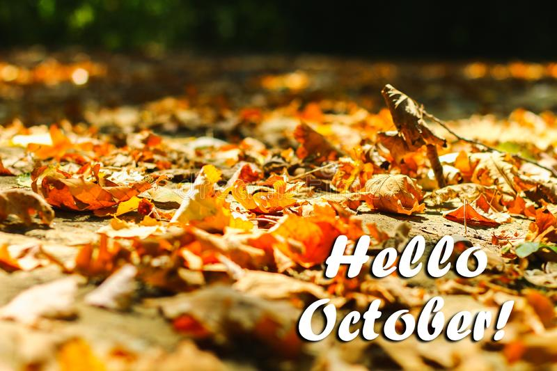 Background of autumn leaves autumn leaves in a Park on earth, yellow, green leaves in autumn Park. Hello october. Background of autumn leaves autumn leaves in a royalty free stock photo
