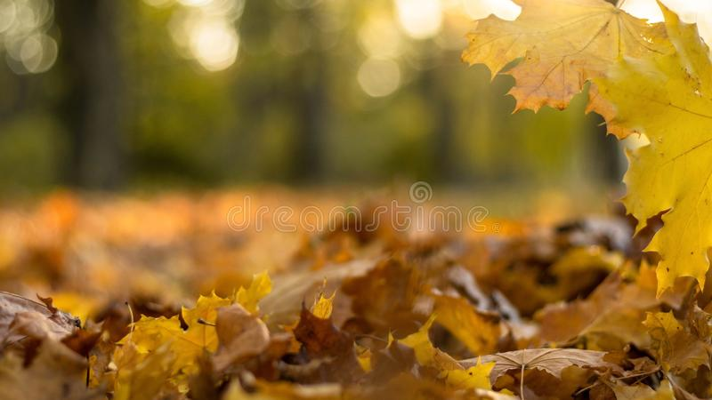 Background of autumn leaves yellow and orange with copy space. Background of autumn leaves yellow and orange with copy space stock photos