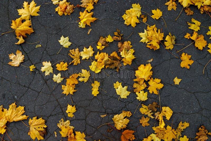 Background of autumn yellow leaves on black asphalt stock images
