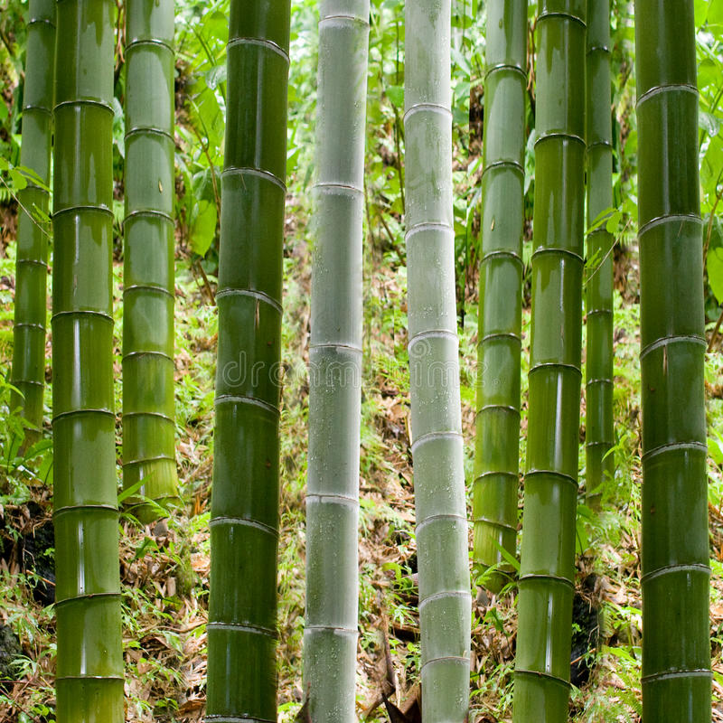 Background in bamboo stock image