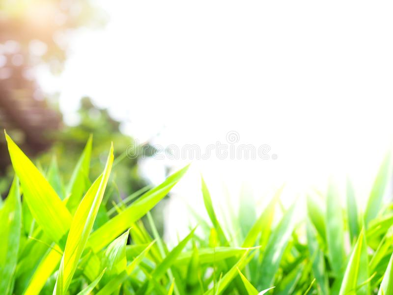 Background with bamboo leaves Fresh green leaves Is border frame image edge below design royalty free stock photography