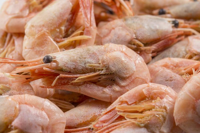 Background banner wallpaper pink boiled shrimp prawn with head and eyes close-up royalty free stock images