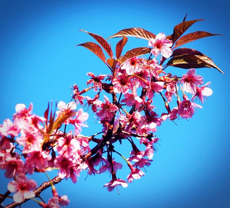 Background, Beautiful, Bloom stock photo