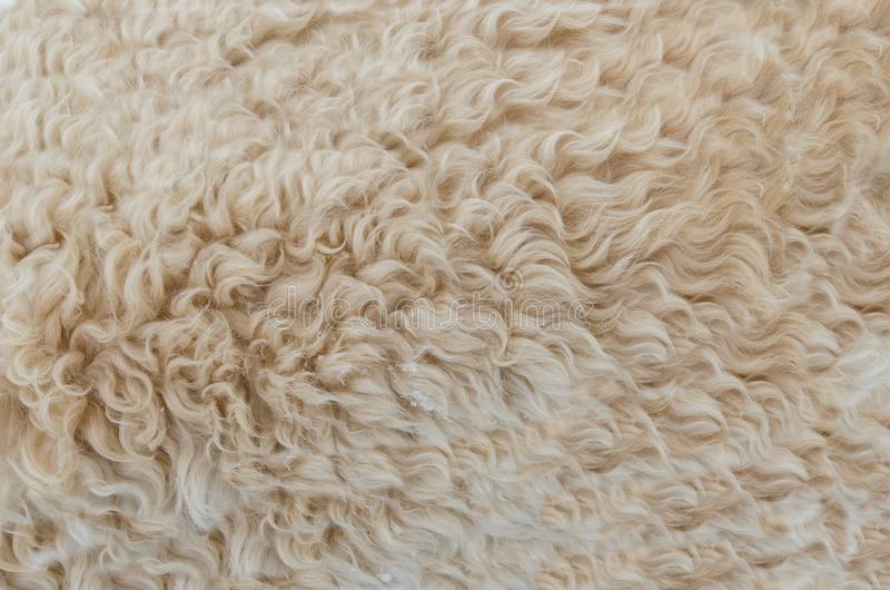 Background, Beige, Brown, Close-up stock images