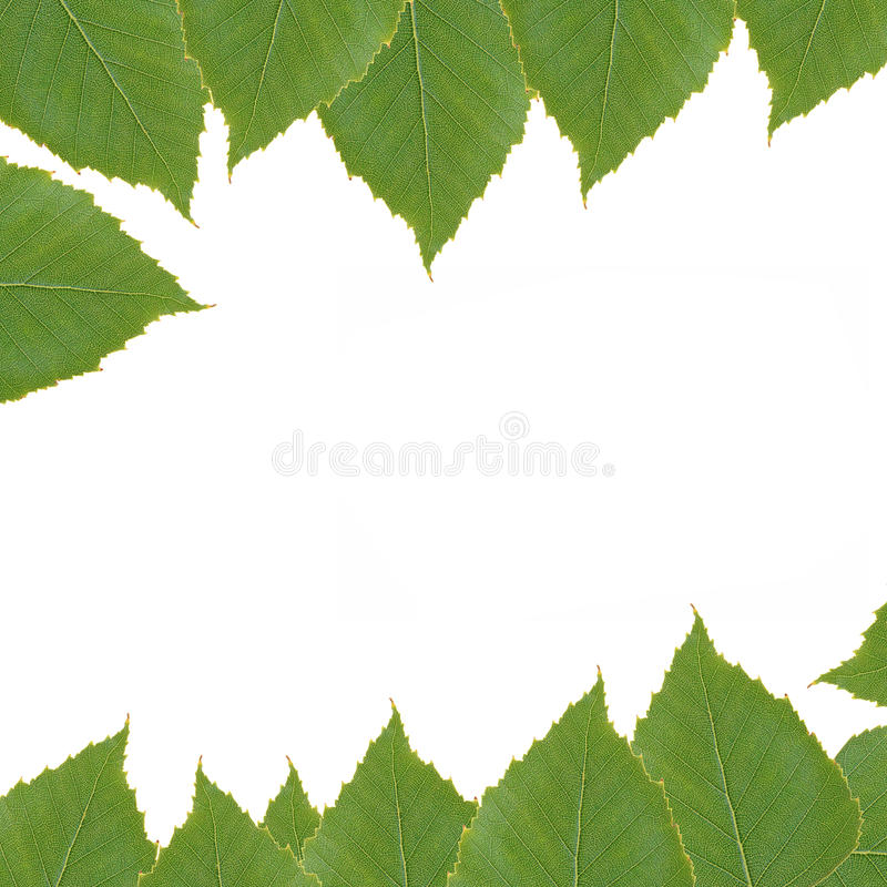 Background with birch leaves stock images