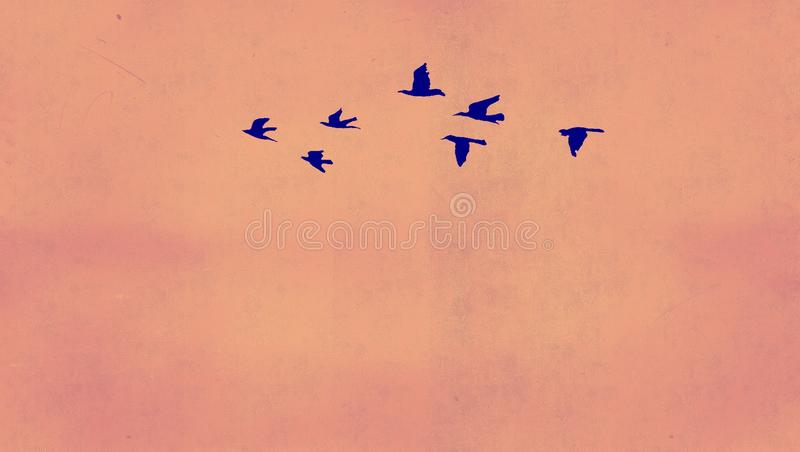 Background bird stock photo