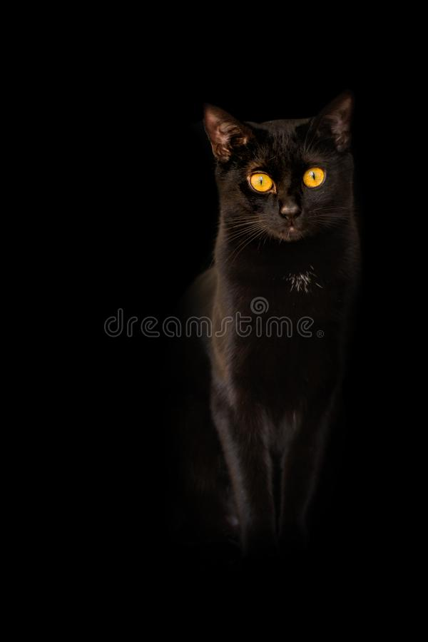 Background Black Cat Yellow Flame Eyes On Black Background Stock Photo Image Of Domestic Cute 116880370