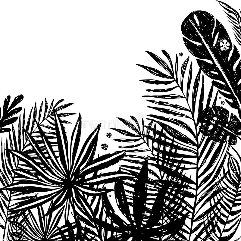 Background with Black silhouettes of tropical plants and leaves . Vector botanical illustration, elements for design. royalty free illustration