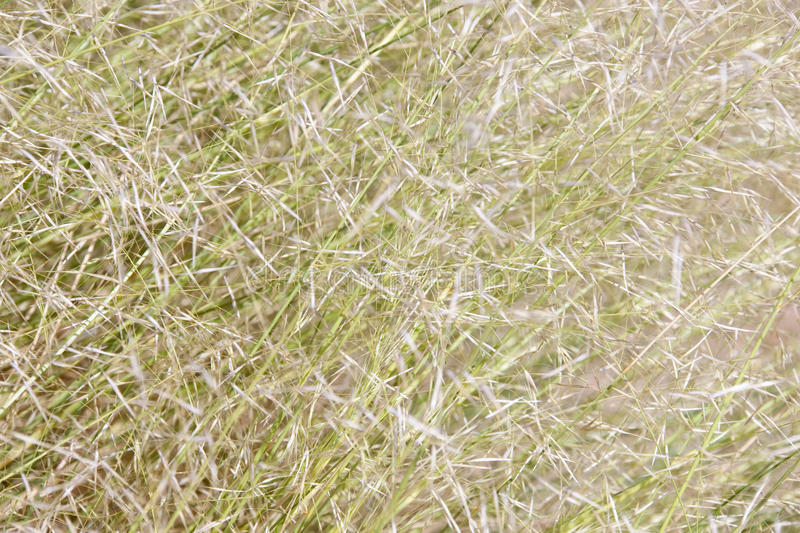Background Of Blades Of Grass In Daylight Royalty Free Stock Image