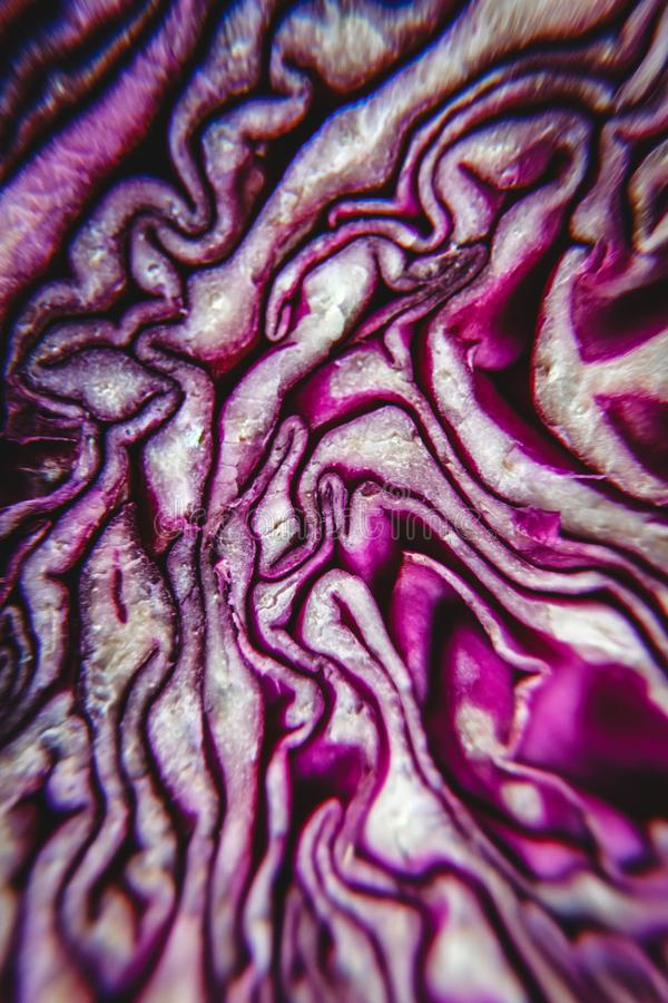 Background of the blue cabbage in the cut, macrophotography. Large plan.  royalty free stock photos