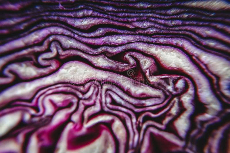 Background of the blue cabbage in the cut, macrophotography. Large plan.  stock photo