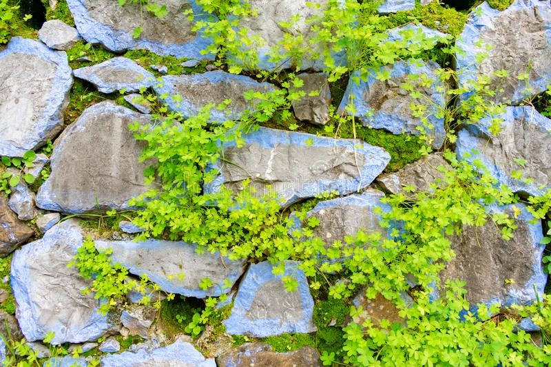Blue Colored Rocks with Plants Background in Chefchaouen Morocco royalty free stock image